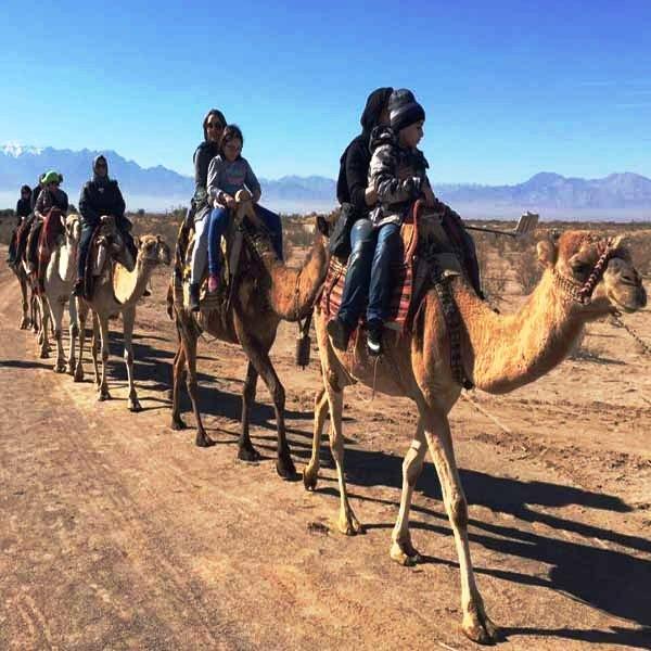 Desert, Camel Riding