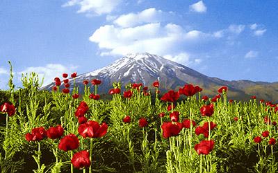 Hiking Mount Damavand, Anemone Flowers